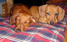 Little Brown Dawg: Baby Peanut