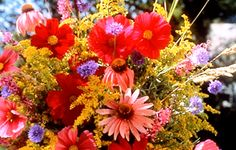 fall-mix-red