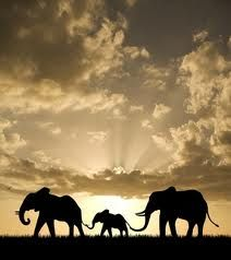elephants in silhouette