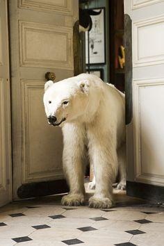 Photo of Deyrolle polar bear taxidermy Save The Polar Bears, Abstract Photography, Photography Series, Modern Photography, Natural History, Arctic, Cowboys, Cute Animals, Creatures