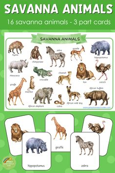 Montessori inspired savannah animals 3 part cards African Savanna Animals, African Wild Dog, African Elephant, African Safari, Animal Activities For Kids, Animal Crafts For Kids, Learning Activities, Nocturnal Animals, Zoo Animals