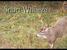 Deer Calling Tip - Snort Wheeze - YouTube