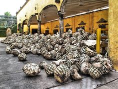 Traditional Mexican Tequila Factory