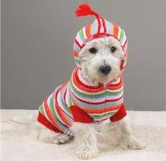 This dog that enjoys rainbow-like wardrobe. | Community Post: 25 Dogs Bundled Up For Winter