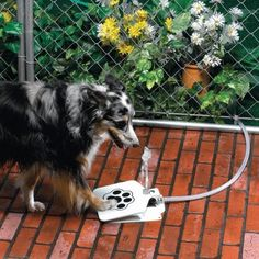 Doggy Water Fountain. So cool! (If I could train my dog to use it!)