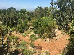 Kirstenbosch Botanical Garden Boulder Beach, Cape Town, Bouldering, Botanical Gardens, South Africa, Plants, Plant, Planets
