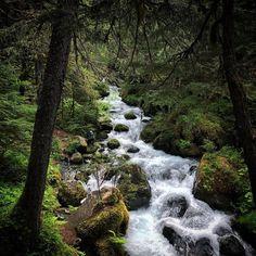 Virgin Creek Falls Trail, Girdwood // Inspiration from Alaska from Scratch (@alaskafromscratch)