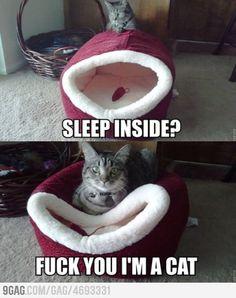 F*k you I am a cat!