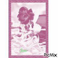 Rose Random Gif, Stickers, Rose, Pink, Roses, Decals