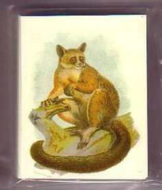 Monkeys of the World  set of 25 Trading Cards Special offer