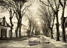 The stories this street could tell... #dorpstreet #stellenbosch