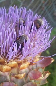 Esta lleno de abejorros.