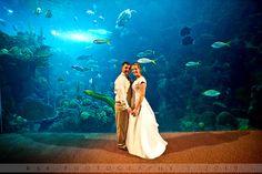 Tampa Wedding Locations | Tampa Wedding Venues | Aquarium Weddings| FL Aquarium