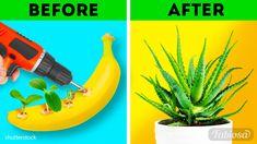 Growing Plants From Seeds, Growing Herbs Indoors, Easy Plants To Grow, Fast Growing Plants, Growing Vegetables, Easy Garden, Indoor Garden, Indoor Plants, Diy Hacks