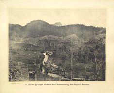 79. Nieuw gekapte akkers met stamwoning der Dajaks. Borneo Antique school board of Nieuw gekapte akkers met stamwoning der Dajaks. Borneo Taken c.1895 and published between 1912 and 1914 in Holland. This photograph depicting the...