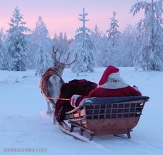 Santa Claus, alias Father Christmas, having a sleigh ride in Lapland's forests with one his favorite reindeer.