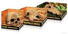 Whether you are looking for turtle accessories or you want to buy a turtle online, My Turtle Store has you covered. Shop with us for all things turtles! Amphibians, Reptiles, Madagascar Hissing Cockroach, Turtle Store, Veiled Chameleon, Buffalo Skull, Dragons Den, Animal Skulls, Bearded Dragon