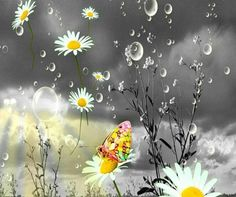 Dandelion s and bubbles