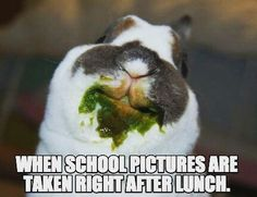Hahaha! Who has kids like this? #rabbit #bunny #bunnies #cuteanimals #pet