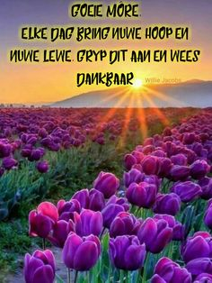 Goeie Nag, Goeie More, Afrikaans, Good Morning, Lekker Dag, Plants, Inspiration, Te Quiero, Buen Dia
