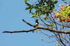 #birds #india #dehradun #shaheenbaug