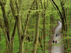 Hainich national park, turingen, germany.  There's a canopy walk in the park... The view from the top is breath-taking