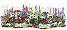 Endless Bloom Perennial Garden: Non-stop flowers from spring through fall. April brings pretty Primroses, followed all summer by a host of colorful favorites, and ending with cushion mums at frost. A professionally designed garden like this would cost hundreds of dollars at a retail store. This 25' x 8' garden includes 54 flowers that take just a few hours to plant and return bigger every year. Prefers sun or partial shade.