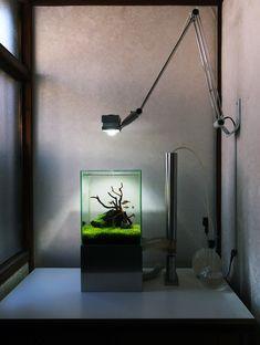 See more in the All Things Aquaria board: https://www.pinterest.com/JibinAbraham/all-things-aquaria/ Aquascaping: Photo