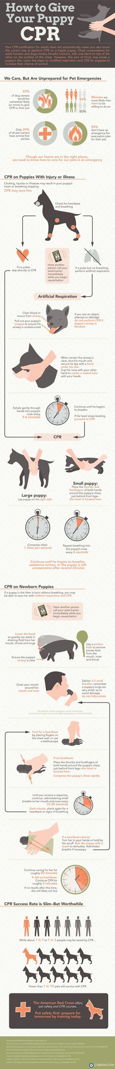 Giving CPR to puppies: It's different from adult dog CPR. Hopefully, you will never need to use this information. If you ever do find yourself in a situation in which a puppy needs life-saving CPR, you will be very grateful you read this post.