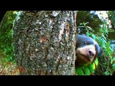 BBC's Bears: Spy in the Woods was a delightful documentary! It's on Netflix now.   Bears around the globe were observed in their natural habitat using specially designed and disguised cameras. David Attenborough narrates a documentary about...