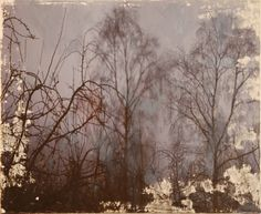 Fog in the Hafod - Julie Shackson