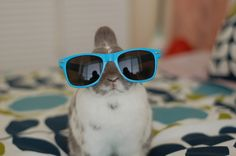 Hipster bunny!