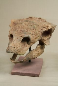 The_Childrens_Museum_of_Indianapolis_-_Cast_skull_of_Gastonia_-_detail.jpg (526×786) - G. burgei. Photo : Wendy Kaveney