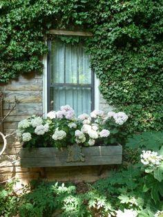 White hydrangea in a rustic window box (photo via cottageflavor.blogspot.com)