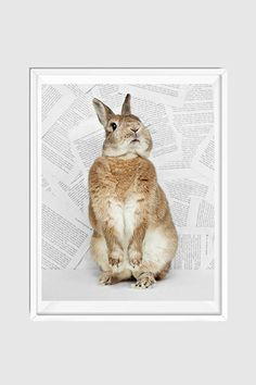 This nursery bunny print is a sweet addition to any gender neutral nursery decor. Fine art, limited-edition and whimsical. Shop our entire nursery bunny print heirloom collection today! Woodland Art, Woodland Nursery, Nursery Modern, Nursery Neutral, Bunny Nursery, Nursery Art, Wildlife Photography, Animal Photography, Animals For Kids