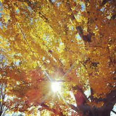 #otoño