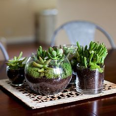 DIY Terrarium on a piece of architectural salvage.                              …