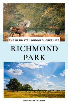 Richmond Park is London's famous deer park and one of the city's gorgeous photography spots. Planning your trip to Richmond Park? Don't miss this handy Richmond Park guide - everything you need to know before visiting my favourite London royal park! Richmond London, Richmond Park, Most Romantic Places, Beautiful Places, Gladstone Park, Cool Places To Visit, Places To Go, Pembroke Lodge, Royal Park
