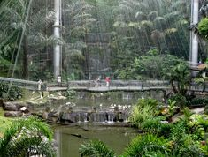 "If you love birds and nature, why not make a visit to the Kuala Lumpur Bird Park? Also known as ""World's Largest Free-flight Walk-in Aviary"", this bird park is definitely something worth exploring. Oh, don't forget your camera's!"