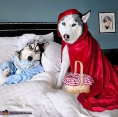 Little Red Riding Husky - 2017 Halloween Costume Contest