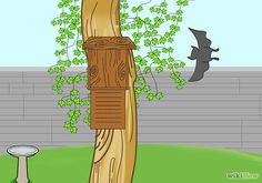 How to build a bat house and attract bats