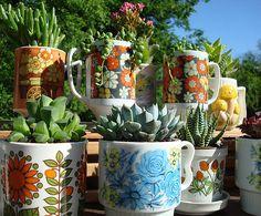 vintage mugs used as mini planters for sedums