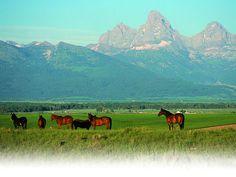Teton Range in the background