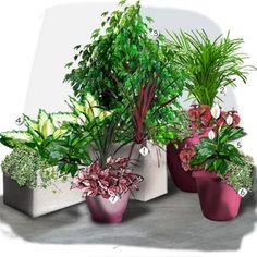 Projet aménagement jardin : Un coin de verdure à la maison