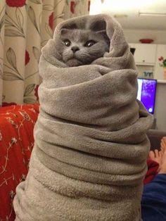 This epic purrito. | 19 Purritos