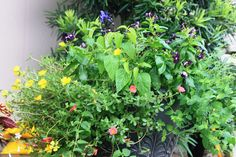patio planter with yellow flowers