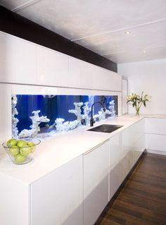 25 meilleures images du tableau Poissons d\'aquarium d\'eau douce ...