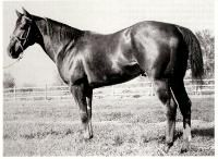 Hard Twist earned a AAA rating and a racing Register of Merit.   1946 World Champion Quarter Running Stallion and  1951 Co-World Champion Quarter Running Stallion.   Hard Twist made an amazing comeback  at the age of 8, setting track records.