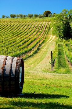 Barrel in Vineyard Volterra, Province of Pisa, region of Tuscany , Italy Pisa, Places To Travel, Places To See, Places Around The World, Around The Worlds, Magic Places, Under The Tuscan Sun, Tuscany Italy, Sorrento Italy
