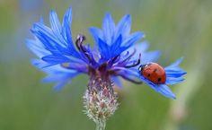 Ladybug on button